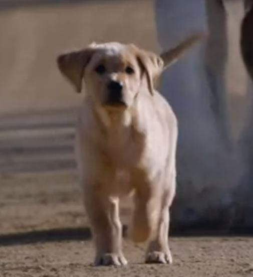 """Puppy Love""– Budweiser Super Bowl XLVIII Commercial"