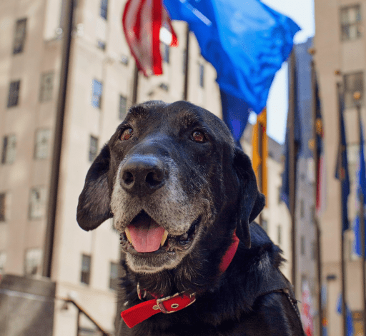 'My Old Dog' resources for military service members and veterans