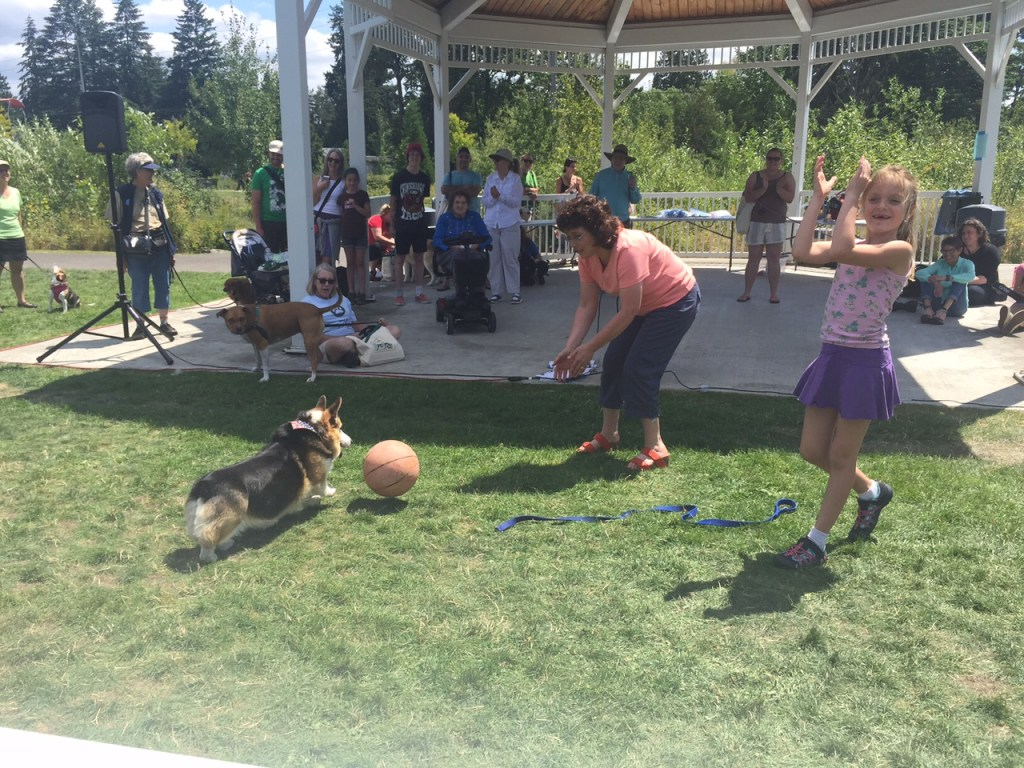 Fred the corgi plays soccer in the Old Dog Pageant