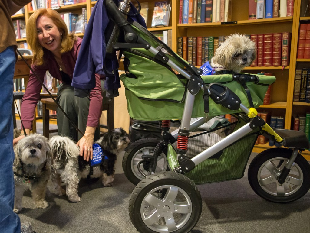 "Laura Coffey, author of ""My Old Dog: Rescued Pets with Remarkable Second Acts,"" mingles with dogs at Third Place Books in Lake Forest Park, Washington on Feb. 17, 2017. (Photo by Karen Ducey)"