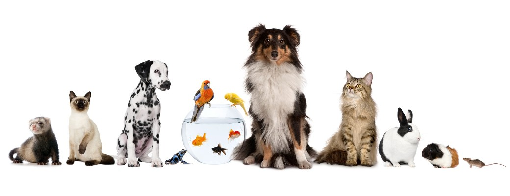 Group of pet : Dog, cat, rabbit, ferret, goldfish, frog, rat, bird, guinea pig, reptile