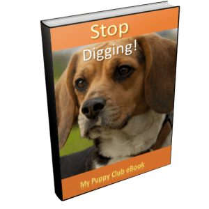 Stop puppy digging