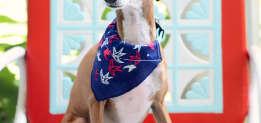 Easy DIY Doggie Bandana