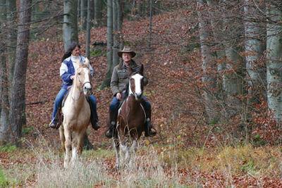 Pferdefachleute und -Freunde gesucht