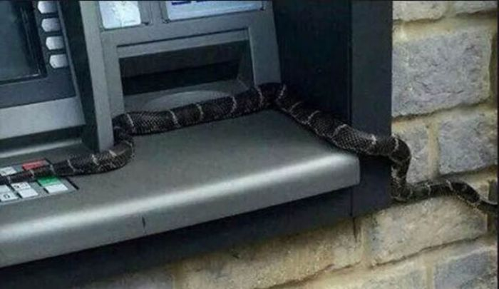 SHOCKING!! Snake Withdraws Cash At Barclays Bank ATM [See Photos]