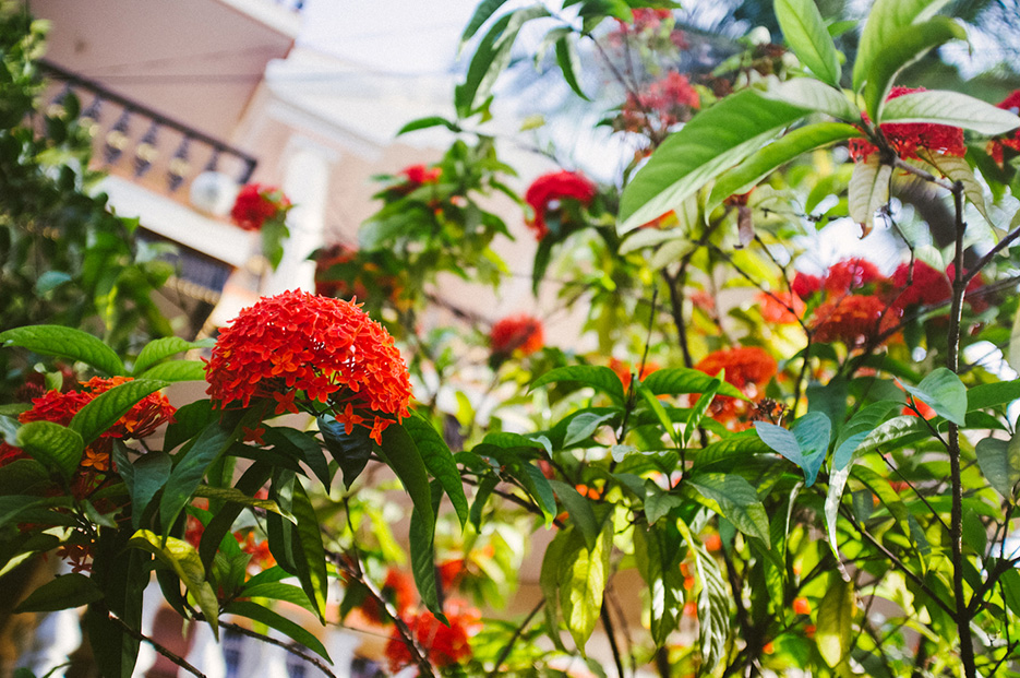 Bangalore city Day 03 Koramangala and Toit. Photography by professional Indian lifestyle photographer Naina Redhu of Naina.co