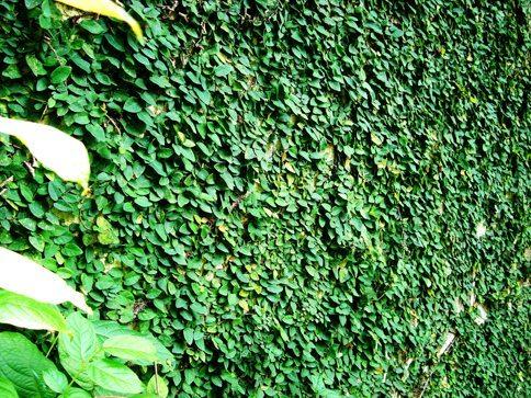 leafWallImg.jpg