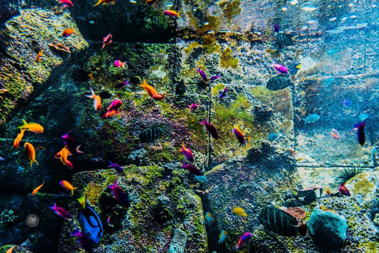 Naina.co, #EmiratesHolidays, #REDHUxEmirates, #EyesForDubai, Atlantis The Palm, Atlantis Resort, Atlantis Hotel, UAE, Dubai, Travel Photographer, Travel Blogger, #EyesForLuxury, #EyesForLifestyle, Experience Collector, Middle East, DXB, Holiday, Naina Redhu, Professional Photographer, Aquarium, Arabian Adventures, The Lost Chambers, Sea Creatures, Fish, Water World, Sting Ray, Crustaceans, Jellyfish