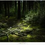 Zonlicht speelt een spel in de bossen.