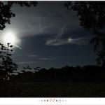Catching a moondog (1D131067)