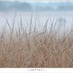 Grass (1D132337)