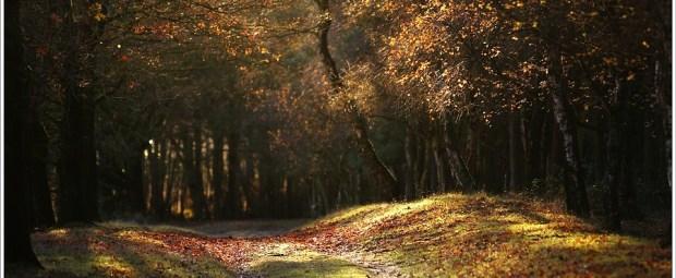 Het gouden zonlicht in het bos.