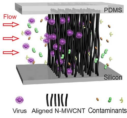 Illustration of size-based virus enrichment by the aligned carbon nanotube array