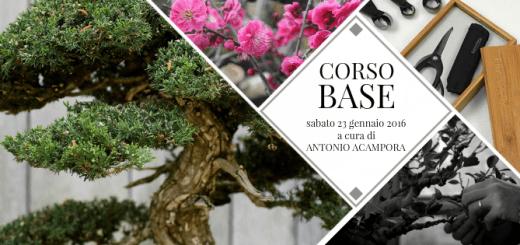 Corso Base Napoli Bonsai Club