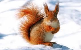 Hayvanların Kışın Yaşamı