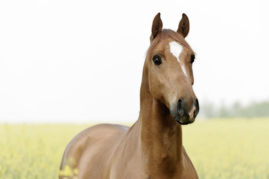 photographe chevaux