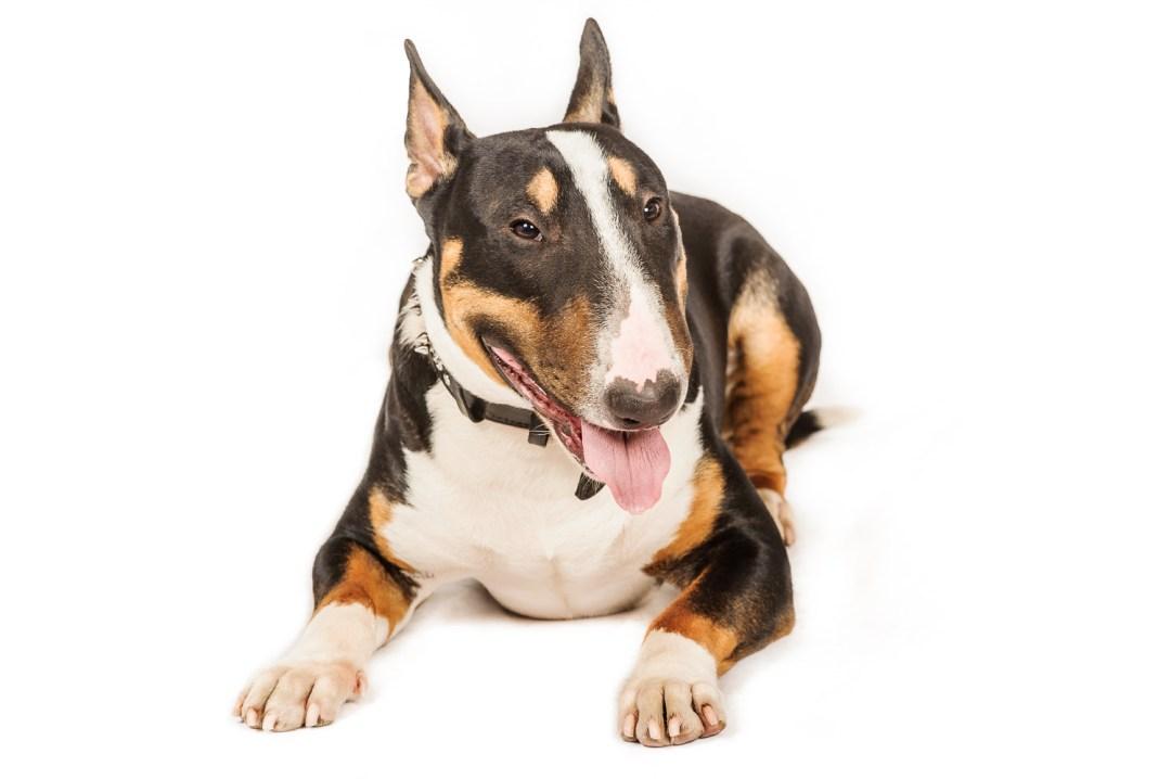 photographe de chiens