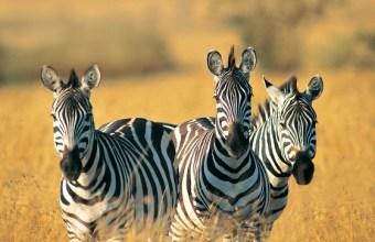 Animali nel Mondo, regno degli animali