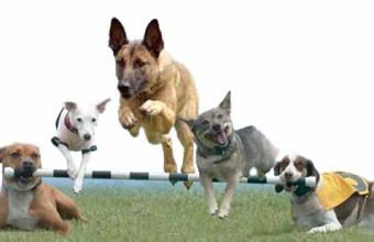 Diventare addestratori di cani può far cambiare vita professionale