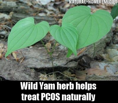 How To Treat Pcos Naturally With Herbs
