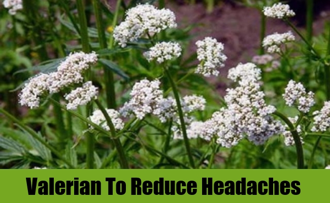 Valerian To Reduce Headaches