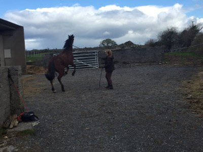 natural horsemanship ireland