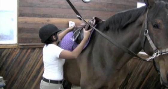 natural horsemansio ireland training