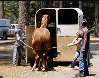 horse trailer loading problems