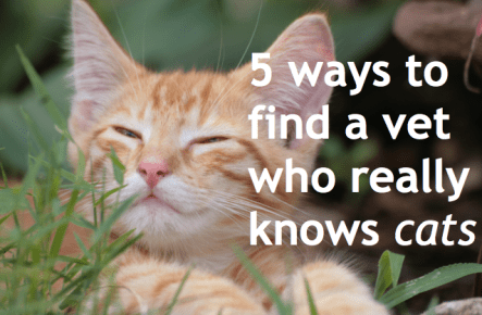 5waystofindacatvet 5 ways to find a vet who really knows cats (it could save your cats life)
