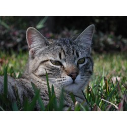 Small Crop Of Ibs In Cats