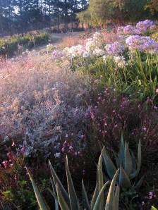 Kendal Estate Stellenbosch