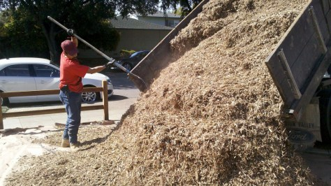 Arbor mulch delivered in a truck