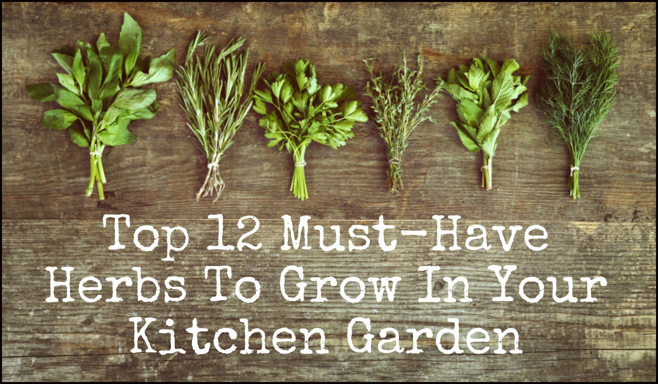 First Your Kitchen Garden Herb Garden Ideas Bunnings Herb Garden Ideas Uk 12 Must Have Herbs To Grow garden Herb Garden Idea
