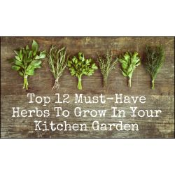 First Your Kitchen Garden Herb Garden Ideas Bunnings Herb Garden Ideas Uk 12 Must Have Herbs To Grow