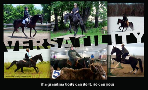 versatility of the naturally gaited horse