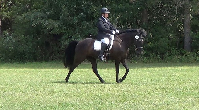 Gaited dressage