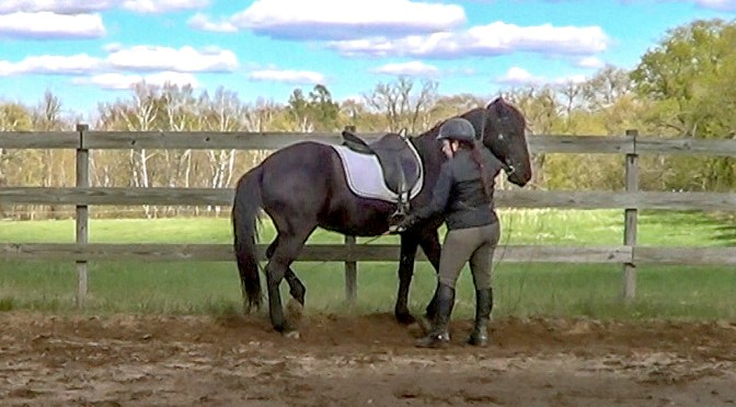 Piaffe in hand for the gaited horse