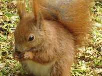 red_squirrel363