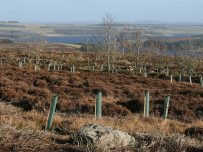 New woodland at Cowbyres Farm, Blanchland Credit: NPAP/ Lis Airey