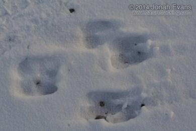 Bighorn Tracks
