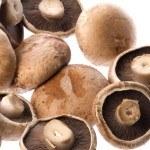 Micoterapia: los hongos también nos ayudan a sanar
