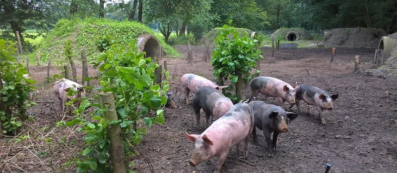 natuurlijke-varkens-pagina