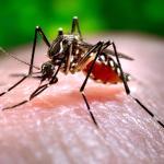 140703-mosquito-1722_c3770309e8050947cfe125e7b1a31753 (1)