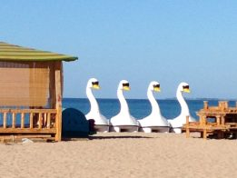 swan boats on a beach