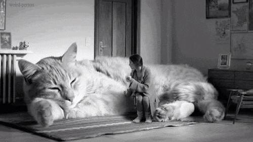 【猫動画】もしネコがソファだったら
