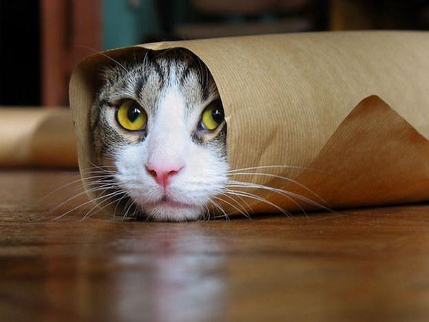 【猫画像】ぐるぐるの猫巻き – 巻かれるネコたち