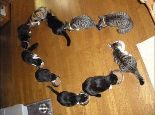 【猫画像】フォーメーション : ハート