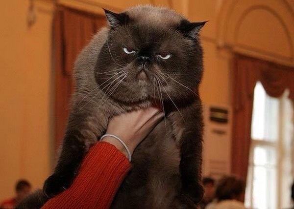 【猫画像】怒ってる?とよく言われます