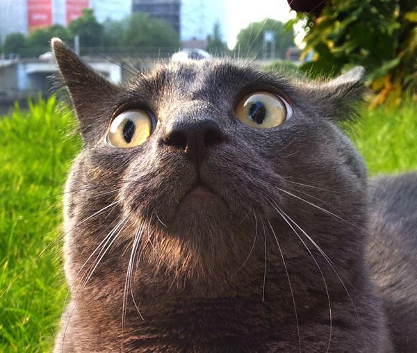 【猫画像】初外出に動揺を隠し切れない猫たち 9選