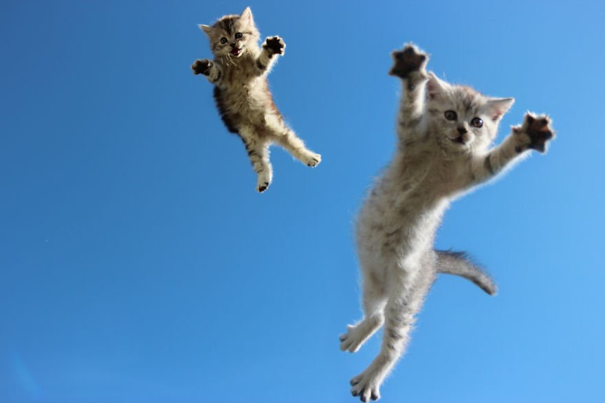 【猫画像】親子でジャンプ – 空中猫 パート2
